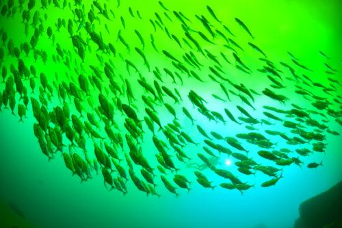 鹿児島 硫黄島で見れる水中オーロラ 硫黄島への行き方
