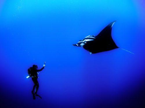 鹿児島 硫黄島で見れる水中オーロラ