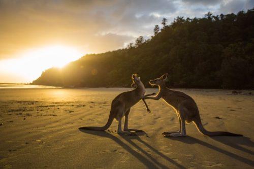 ロマンスからのオーストラリア移住はハードルが高い?